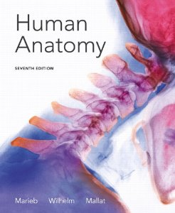 Test Bank (Complete Download) for  Human Anatomy