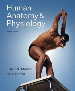 Test Bank (Complete Download) for  Human Anatomy and Physiology