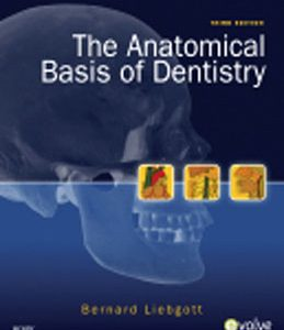 Test Bank (Complete Download) for  The Anatomical Basis of Dentistry