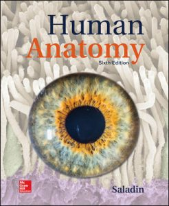 Test Bank (Complete Download) for Human Anatomy 6th Edition by Saladin ISBN: 9781260210262 Instantly Downloadable Test Bank